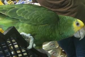 qwah-birdd-photos